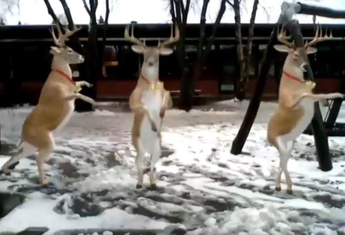 dancing reinideer
