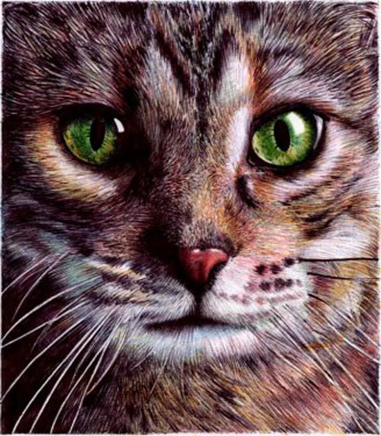realistic pen drawings 3 cat