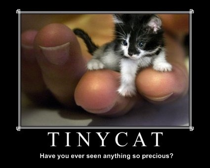 tiniest-kitten-in-the-world--1