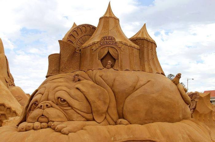 sand dog with flea circus