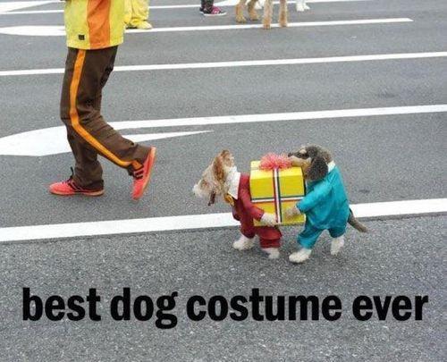 fav best dog costume