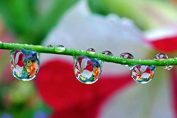 droplets clear