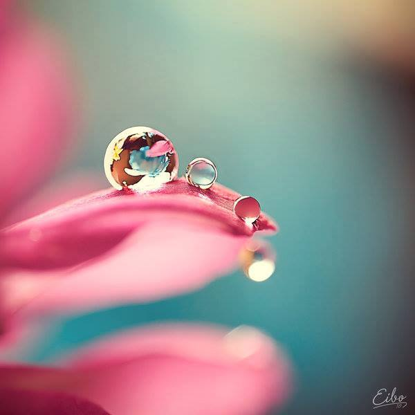 droplets pink