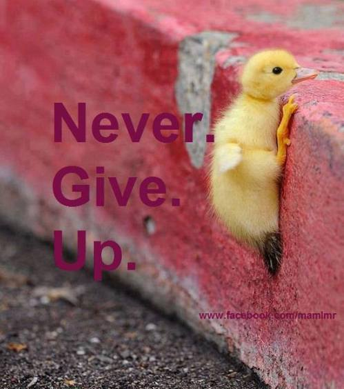 nver give up