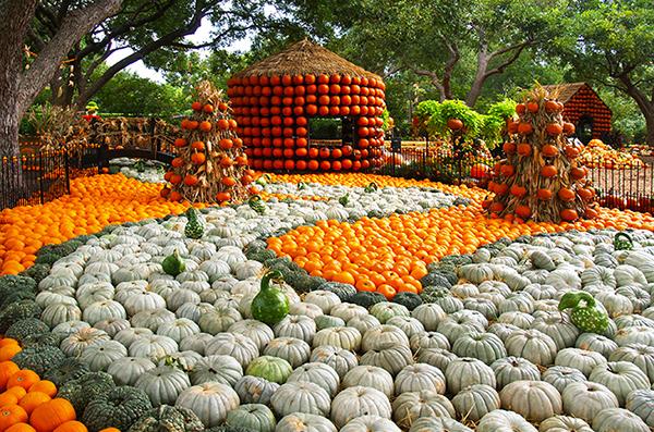 10-autumn-9-17-14-033edita600_1