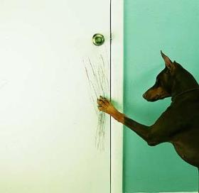 5727862030_dog_scratching_door_xlarge