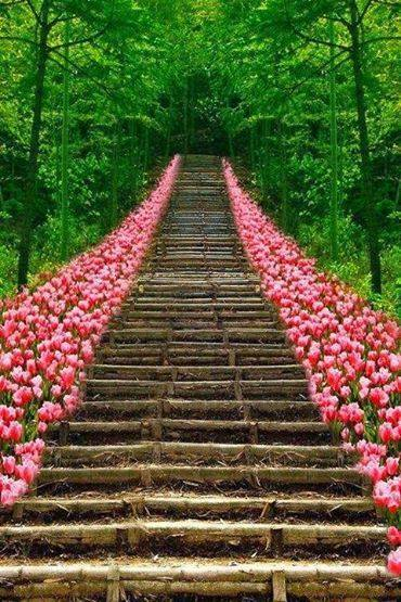Tulip Stair Kyoto Japan