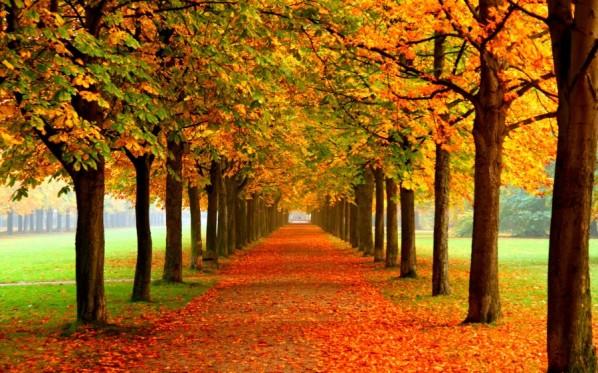 autumn_leaves-900x562