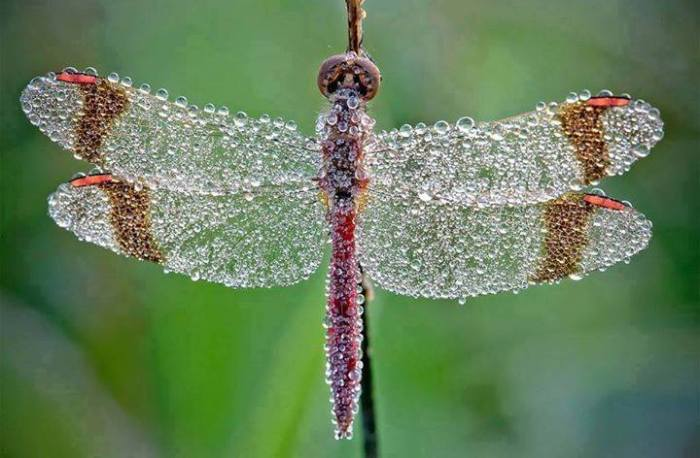 Beautiful shot of a dragonfly covered in morning dew