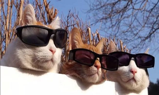 cats sunglasses 10