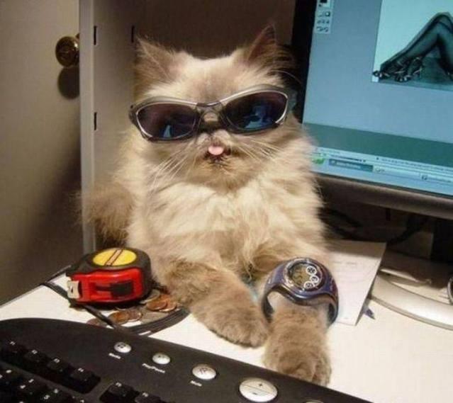 cats sunglasses 3