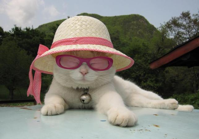 cats sunglasses 4