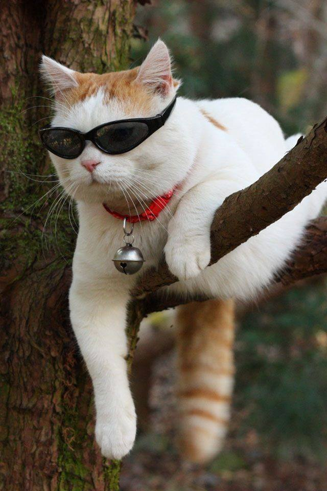 cats sunglasses 5
