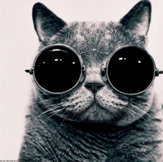 cats sunglasses 7