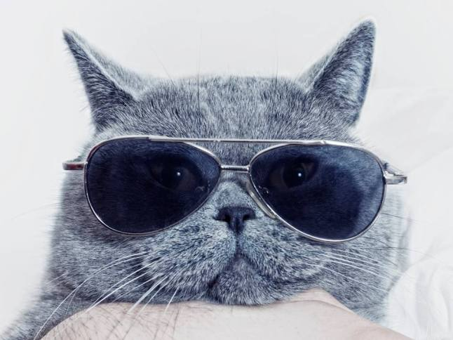 cats sunglasses 8