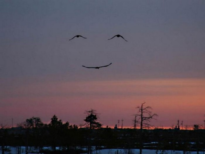 face blissful birds