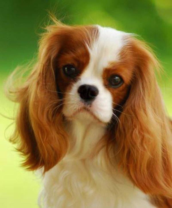 19-Cute-Puppies