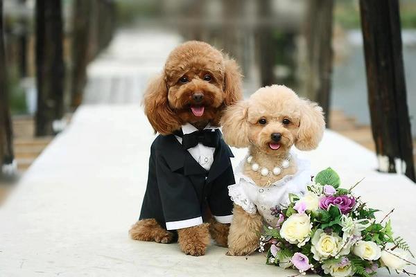 3-Cute-Puppies-Wedding-Rumble
