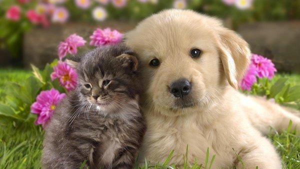 35-Puppy-and-Kitten