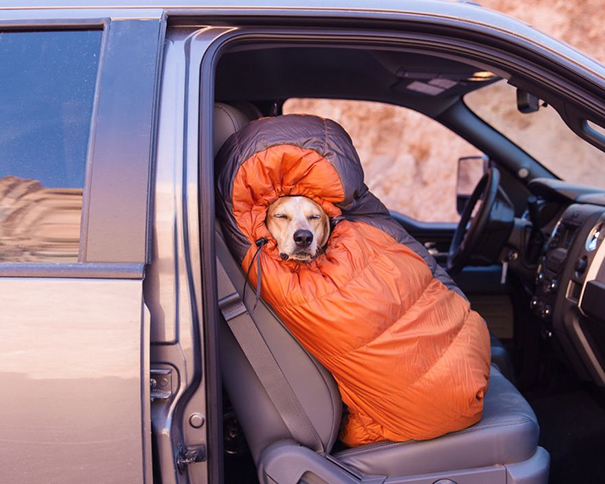 camping-with-dog-10__605