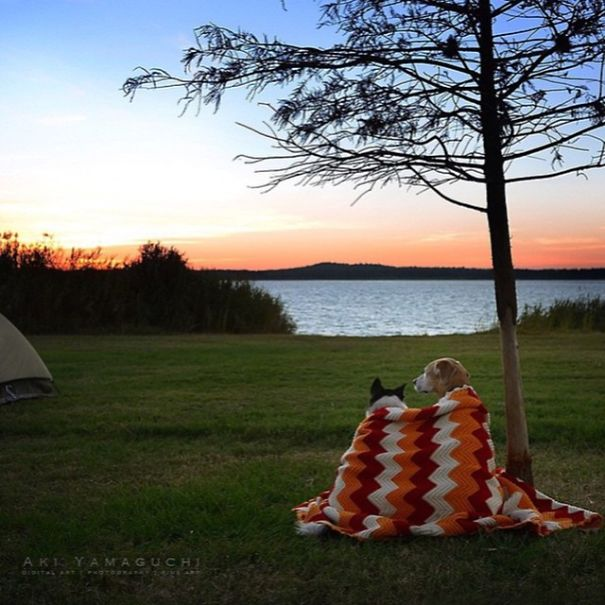 camping-with-dog-ryan-carter-116__605