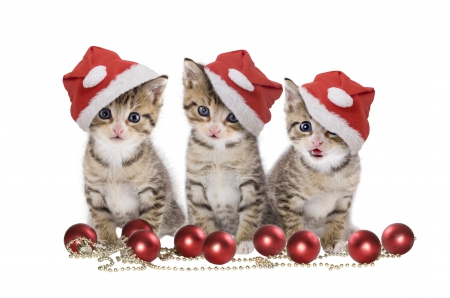 xmascats_by_theclassycat-d8bfc2m