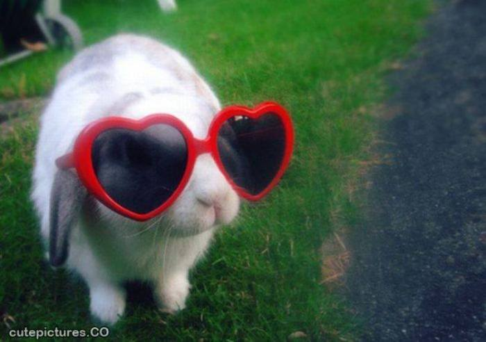 EASTER bunny with red shades