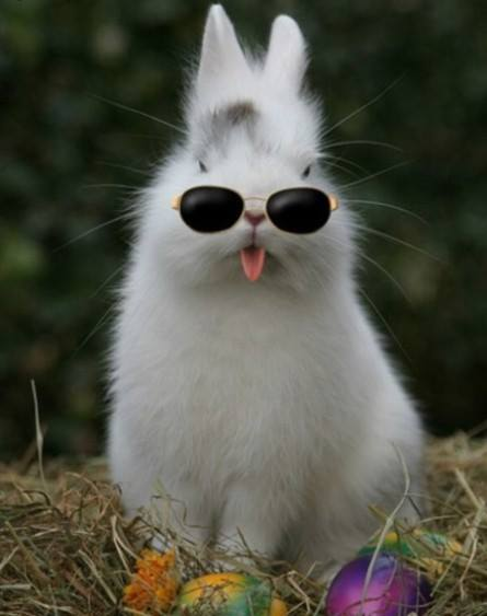 EASTER bunny with shades