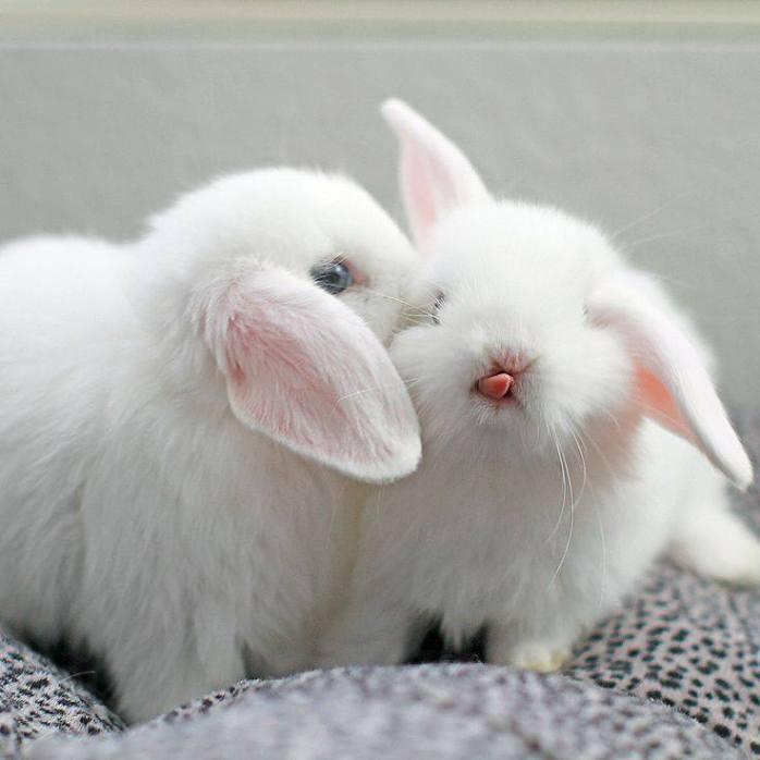 easter cute bunny tongue 3