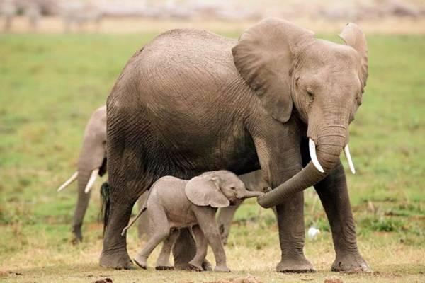 baby_animals_13