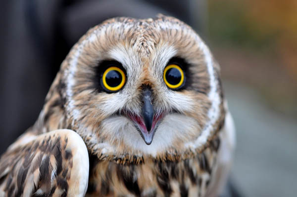 really-funny-owl-faces-pics