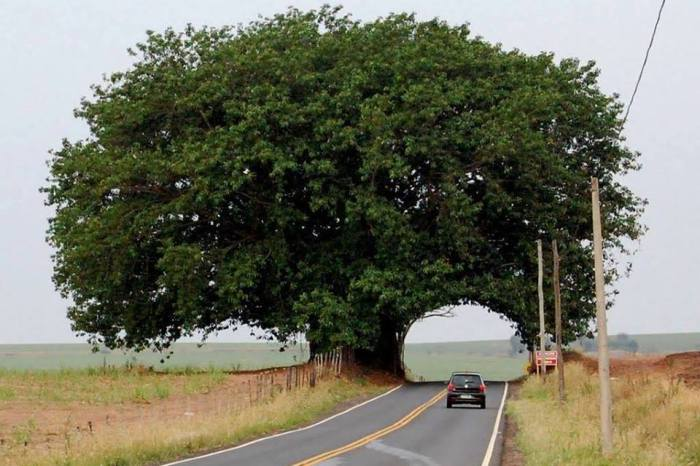 road through side of tree