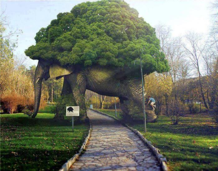 road through tree elephant