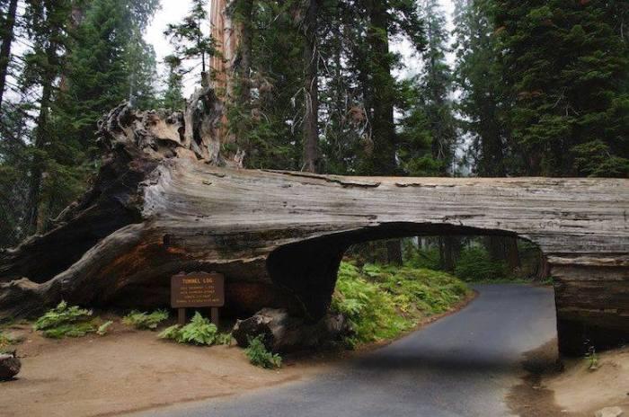 road through trunk