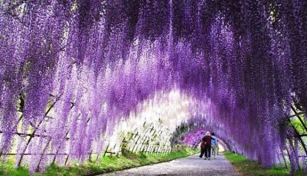 Kawachi Fuji Garden 4