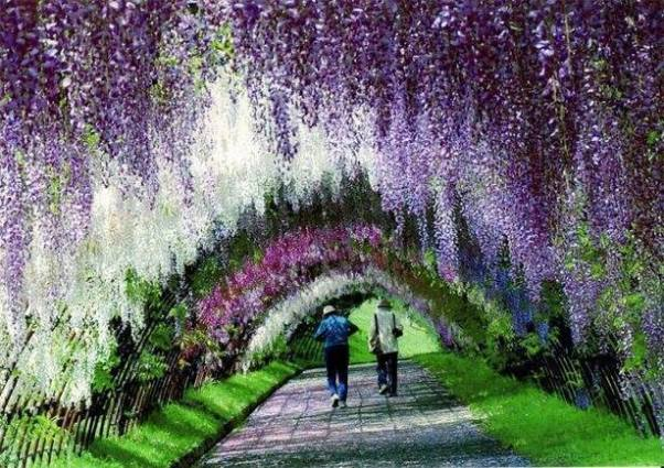 Kawachi Fuji Garden 5