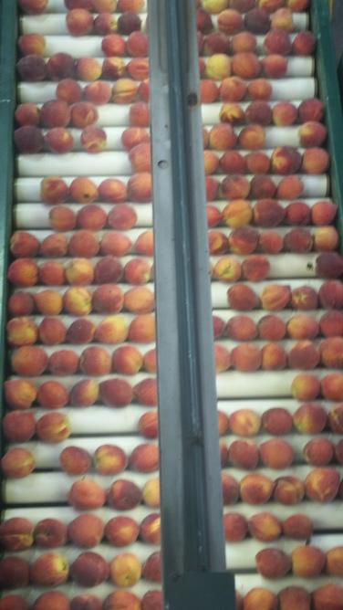 peach-processing
