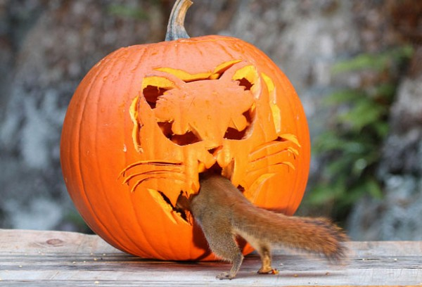 squirrel-pumpkin-06
