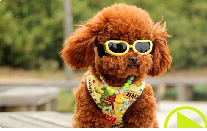 font-b-dog-b-font-glasses-pet-font-b-sunglasses-b-font-goggles-pet-accessories