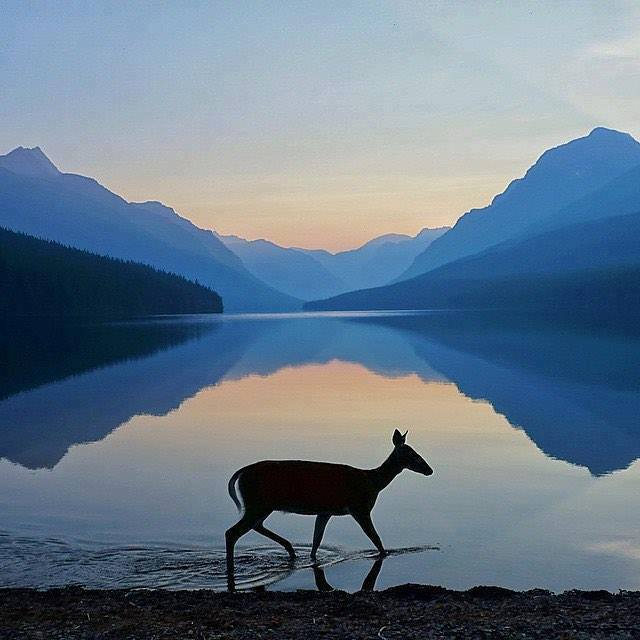 bowman-lake-montana