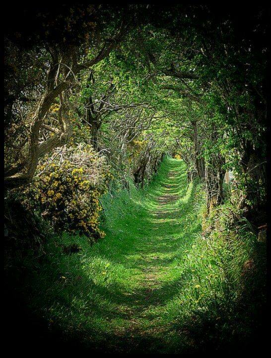 tree-tunnel-northern-ireland