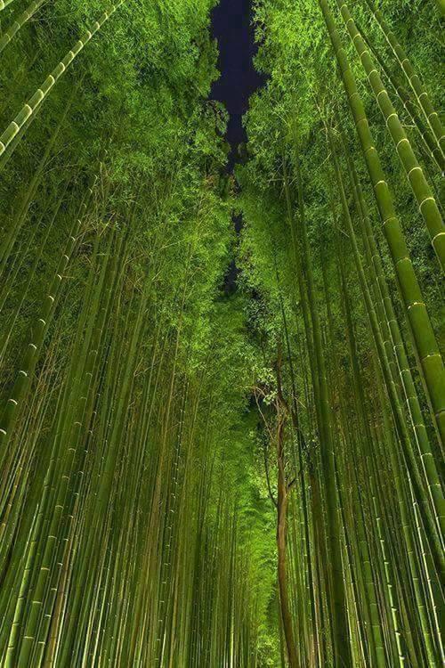 arashiyama-kyoto-japan