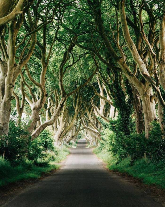 dark-hedges-in-northern-ireland